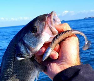 Perrodo guide de pêche, pêche en mer, pêche morbihan