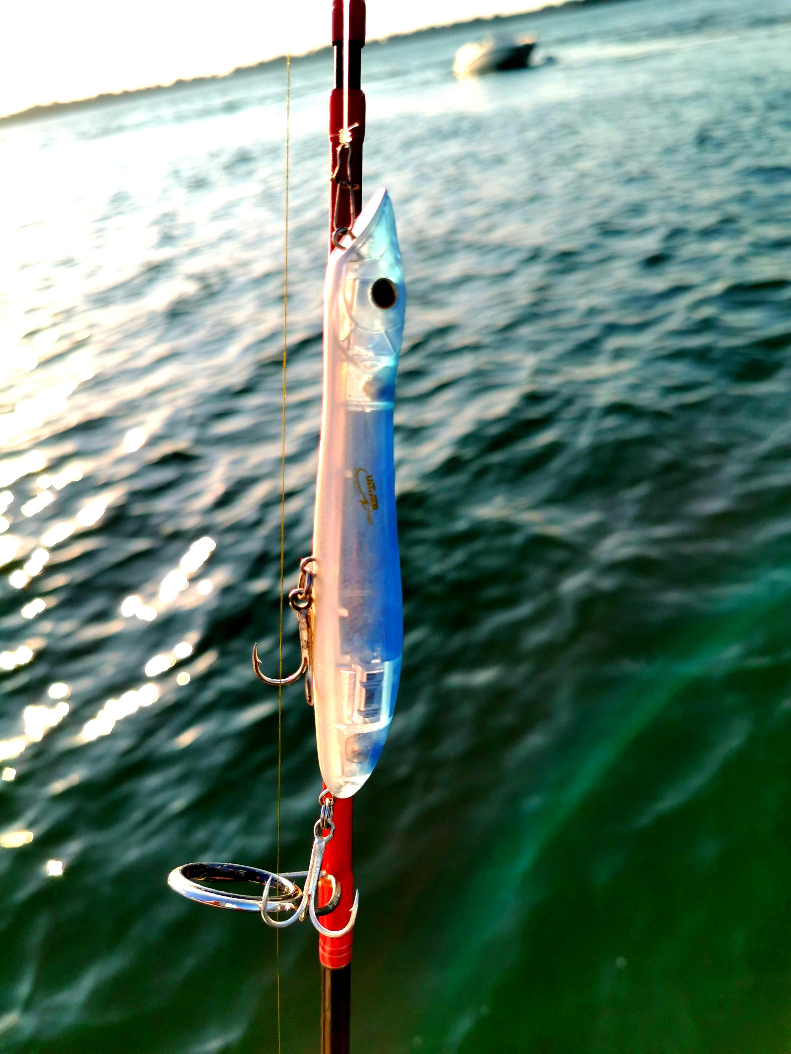 Bilan de la saison 2019 dans le Golfe du Morbihan. Pêche du bar au leurre de surface. Pierre-Yves Perrodo Ultimate fishing