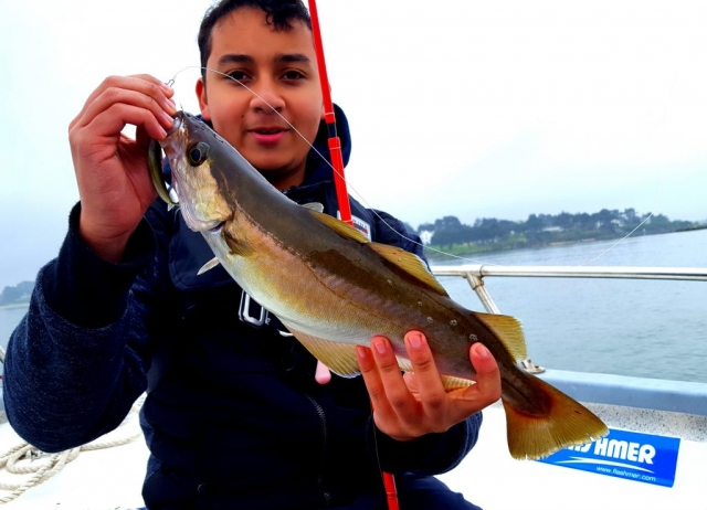 Lieu jaune - Pierre-Yves Perrodo guide de pêche - Golfe du Morbihan
